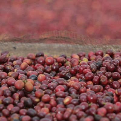 This whole coffee cherry will dry over the course of 3-4 weeks before it is milled down to the seed - Guji Zone.