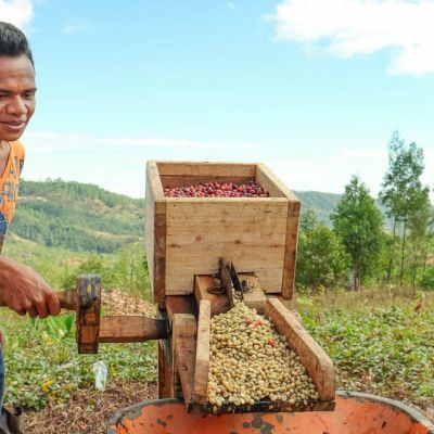 Constructed of gum wood and hammered tin, these locally made hand-crank depulpers make surprisingly quick work of removing the outer cherry from coffee. Haupu, Timor-Leste.