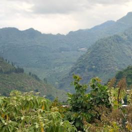 Guatemala Huehuetenango Chalum Lot 2