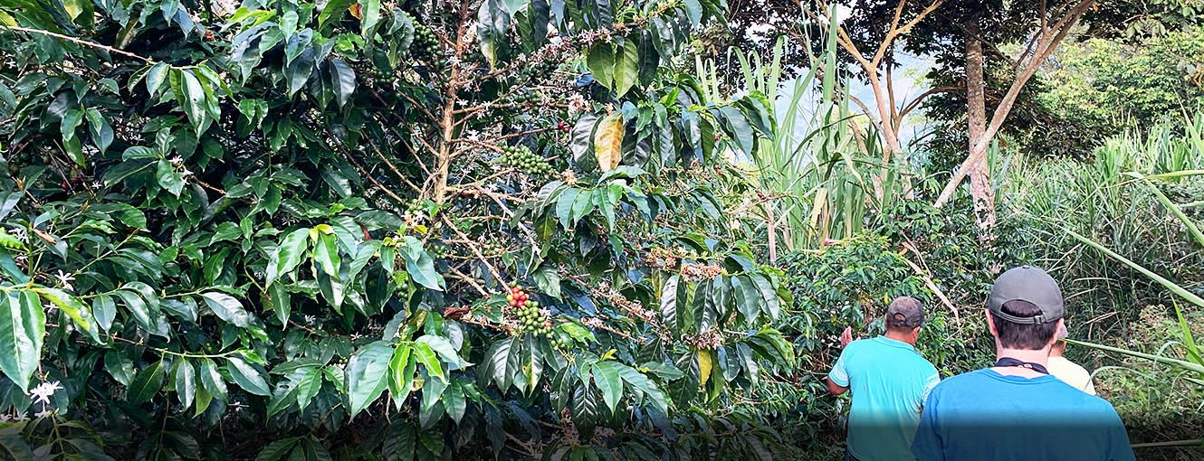 Walking though a cherry-lined path at San Antonio farm in Colombia. Take a look at our entire selection of  Colombian coffee.